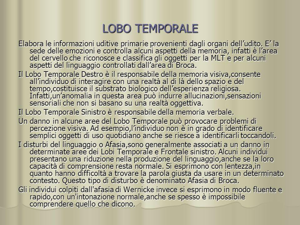 LOBO TEMPORALE