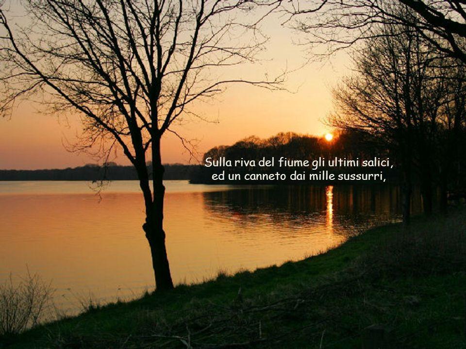 Sulla riva del fiume gli ultimi salici, ed un canneto dai mille sussurri,