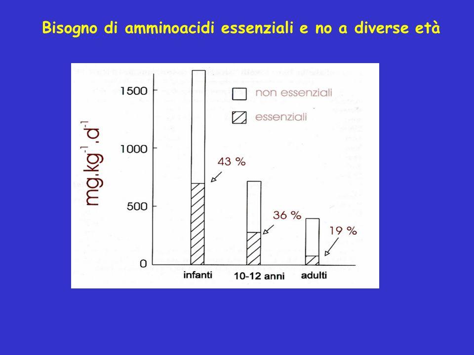 Bisogno di amminoacidi essenziali e no a diverse età