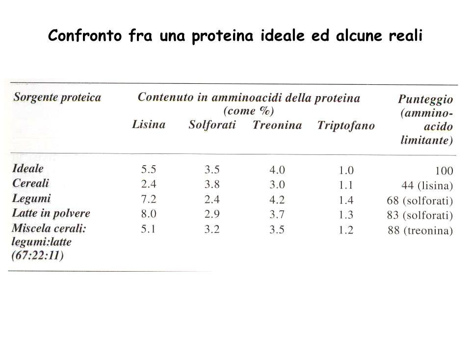 Confronto fra una proteina ideale ed alcune reali
