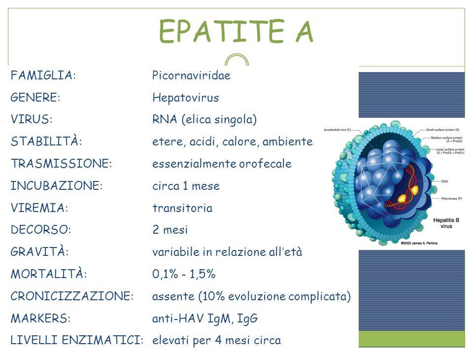 EPATITE A FAMIGLIA: Picornaviridae GENERE: Hepatovirus