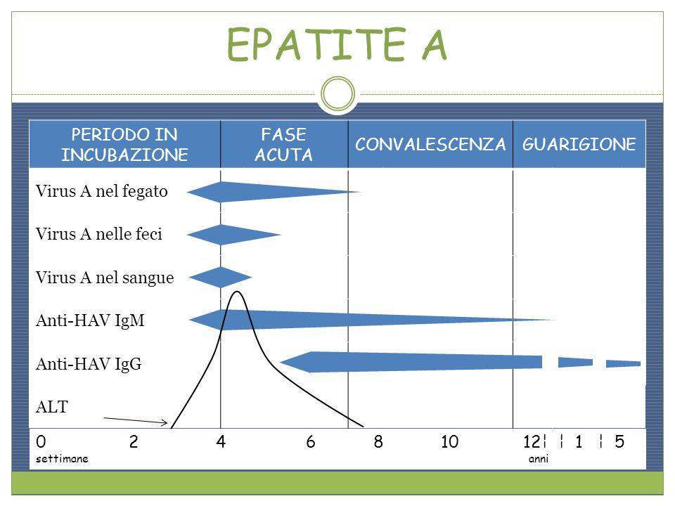 Epatite a ppt scaricare - Epatite c periodo finestra ...