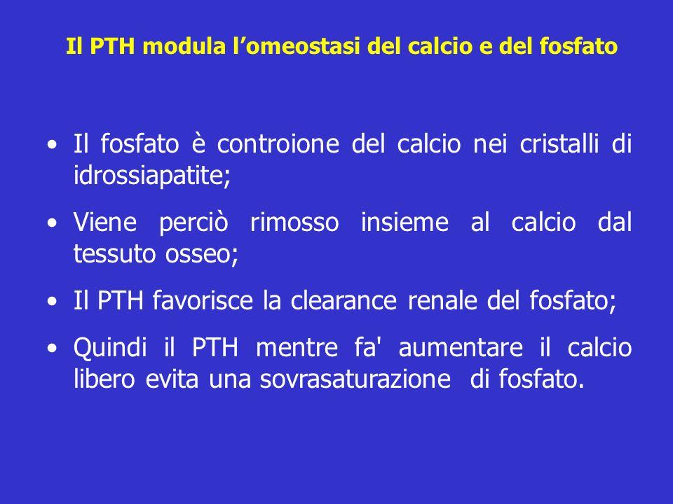 Il PTH modula l'omeostasi del calcio e del fosfato