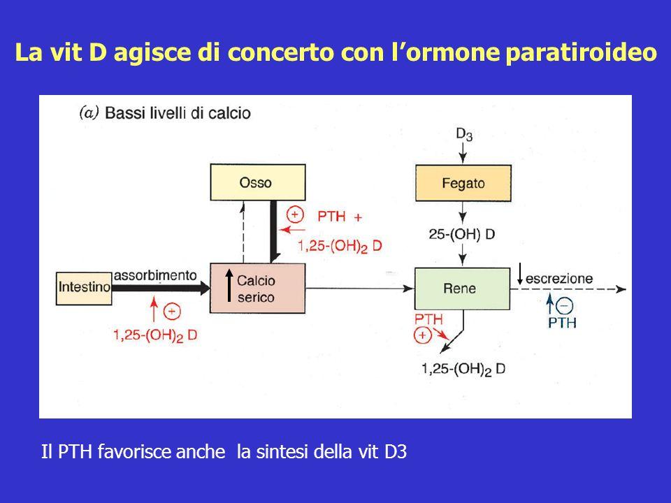 La vit D agisce di concerto con l'ormone paratiroideo