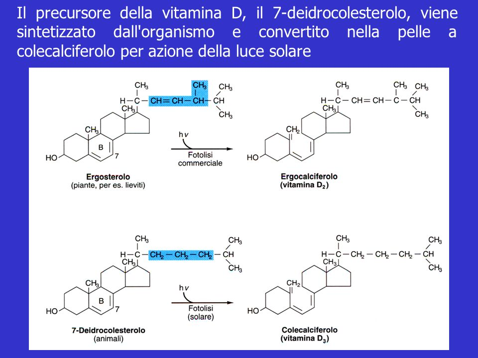Il precursore della vitamina D, il 7-deidrocolesterolo, viene sintetizzato dall organismo e convertito nella pelle a colecalciferolo per azione della luce solare