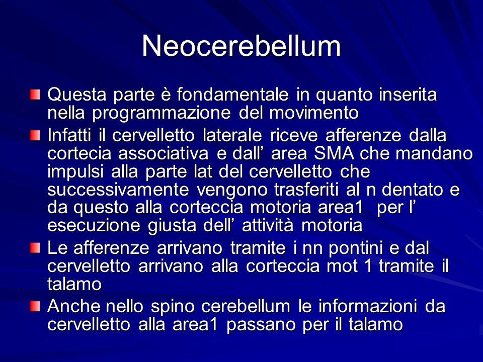 Neocerebellum Questa parte è fondamentale in quanto inserita nella programmazione del movimento.