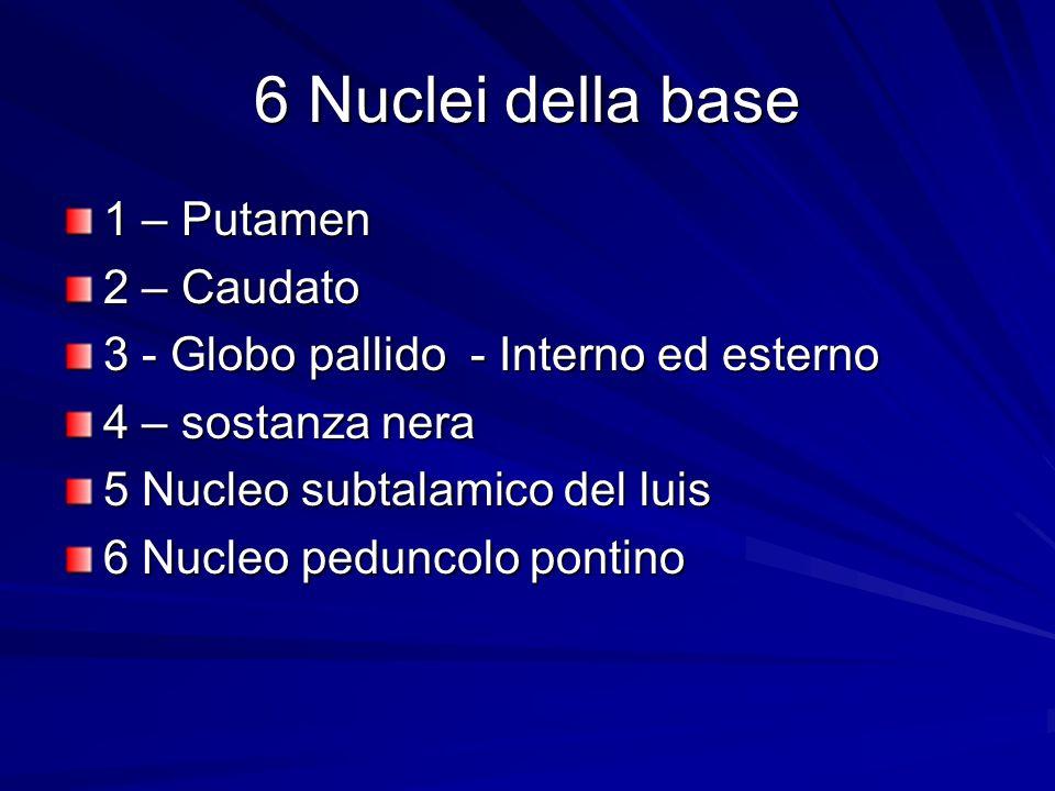 6 Nuclei della base 1 – Putamen 2 – Caudato