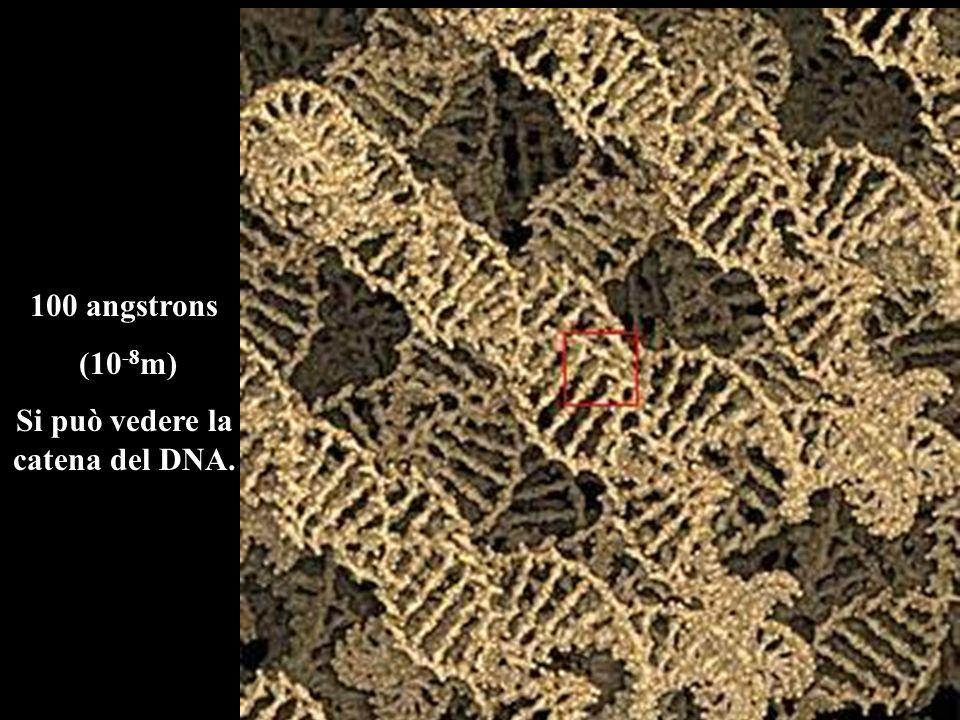 Si può vedere la catena del DNA.