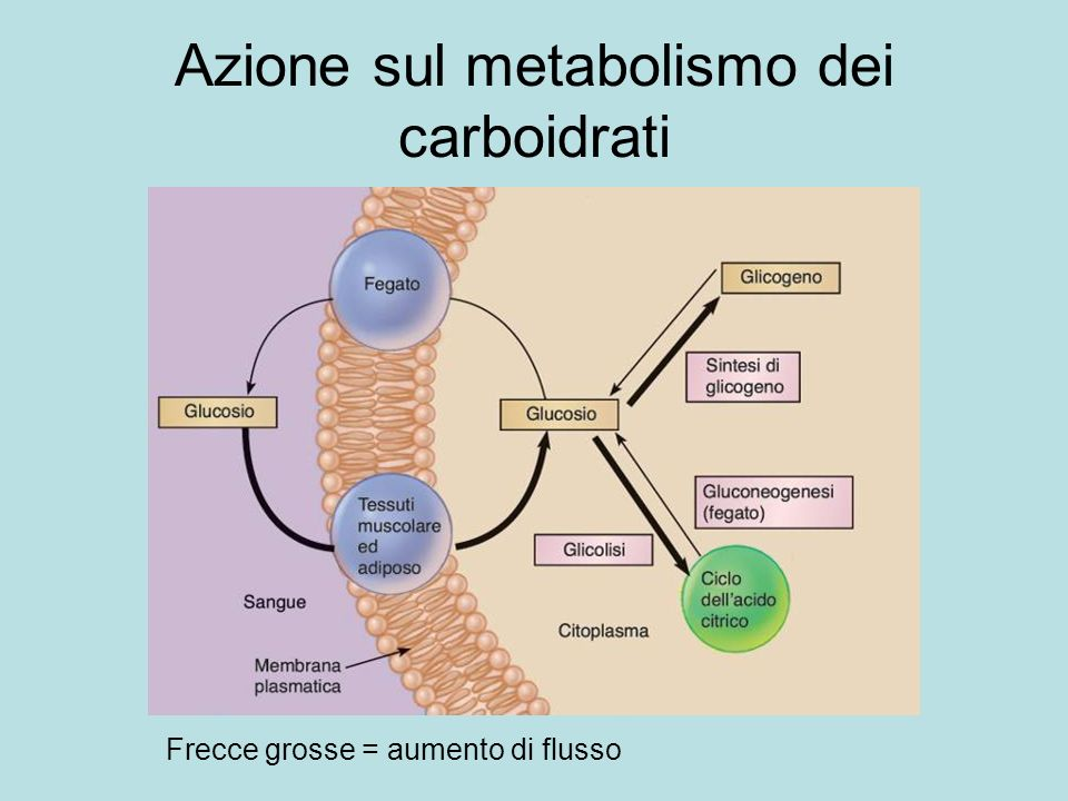 Azione sul metabolismo dei carboidrati
