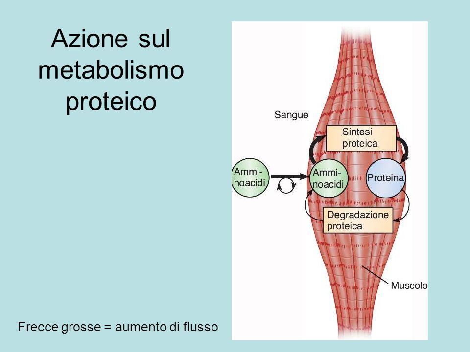 Azione sul metabolismo proteico
