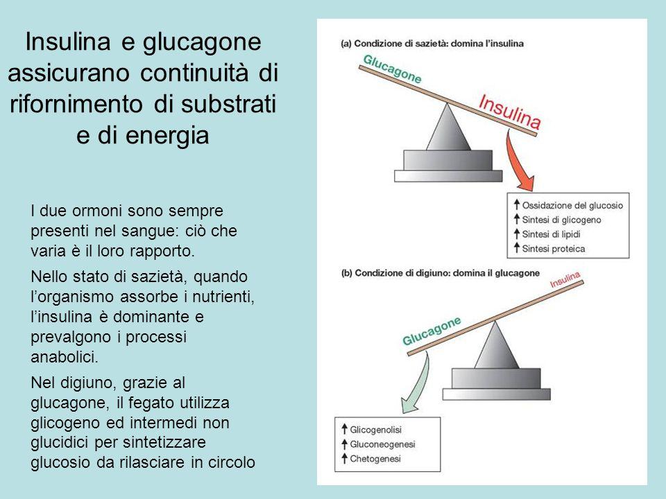 Insulina e glucagone assicurano continuità di rifornimento di substrati e di energia