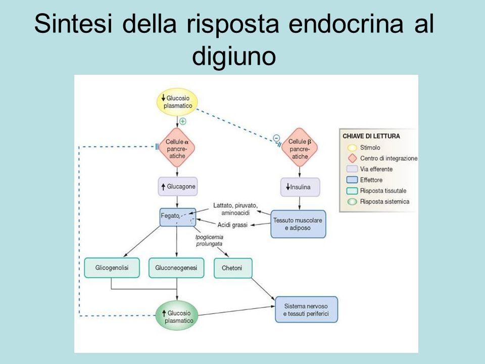 Sintesi della risposta endocrina al digiuno