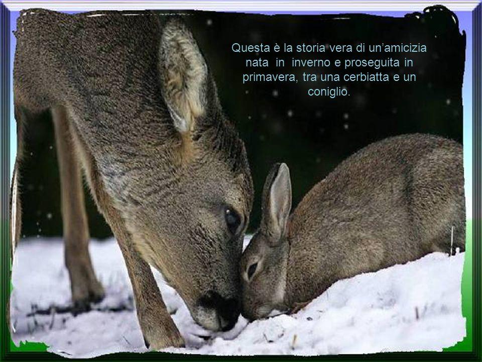 Questa è la storia vera di un'amicizia nata in inverno e proseguita in primavera, tra una cerbiatta e un coniglio.