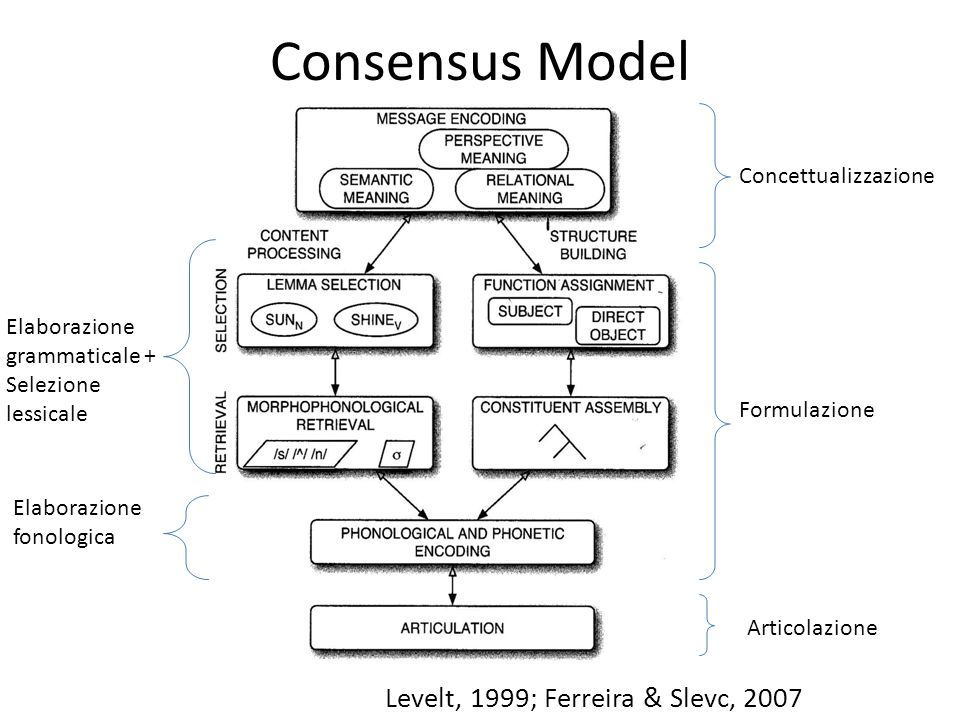 Consensus Model Levelt, 1999; Ferreira & Slevc, 2007