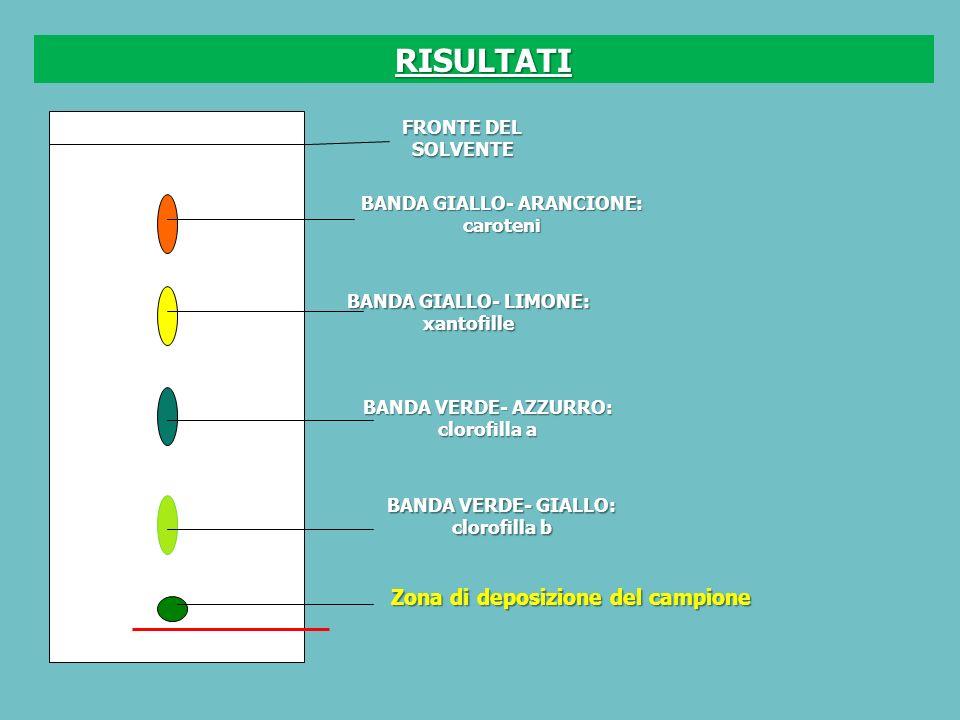 RISULTATI Zona di deposizione del campione FRONTE DEL SOLVENTE