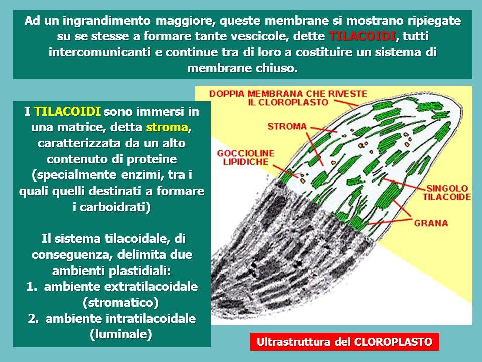 ambiente extratilacoidale (stromatico)