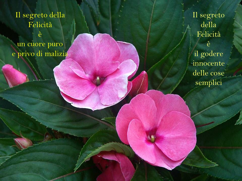 Il segreto della Felicità è un cuore puro e privo di malizia