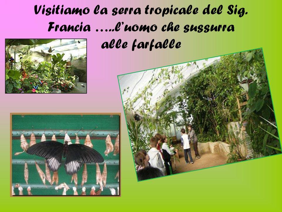 Visitiamo la serra tropicale del Sig. Francia …