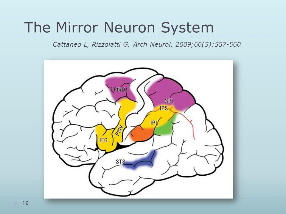 The Mirror Neuron System. Cattaneo L, Rizzolatti G, Arch Neurol
