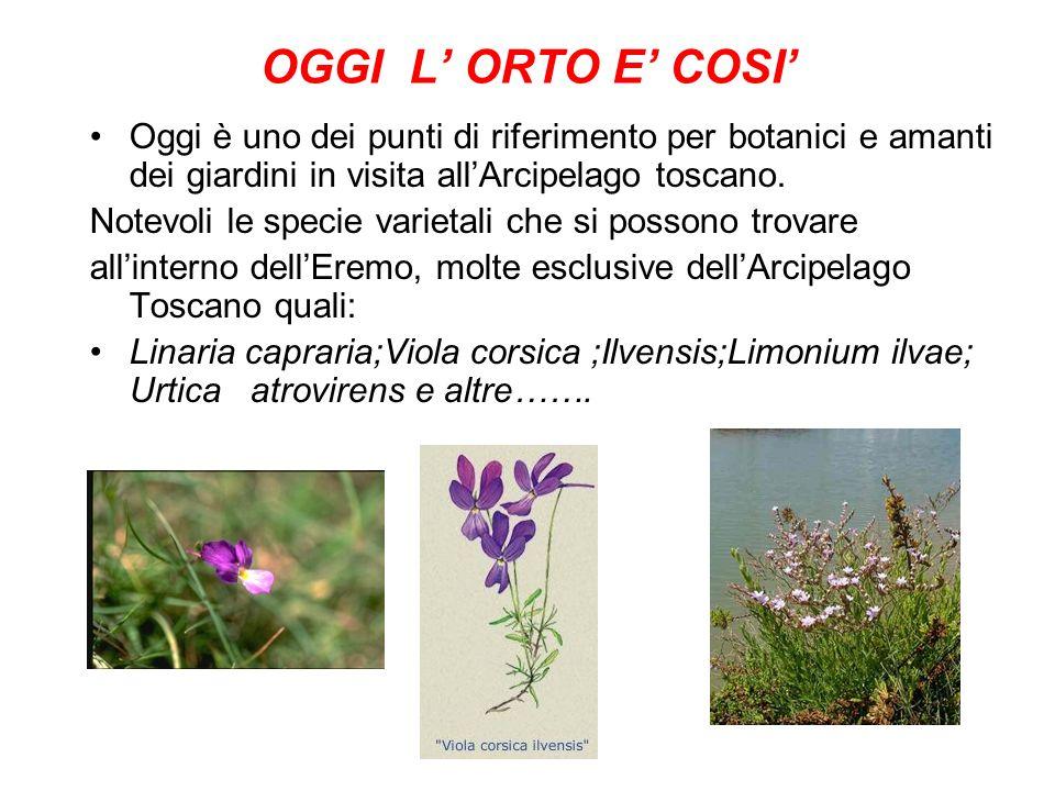 OGGI L' ORTO E' COSI' Oggi è uno dei punti di riferimento per botanici e amanti dei giardini in visita all'Arcipelago toscano.