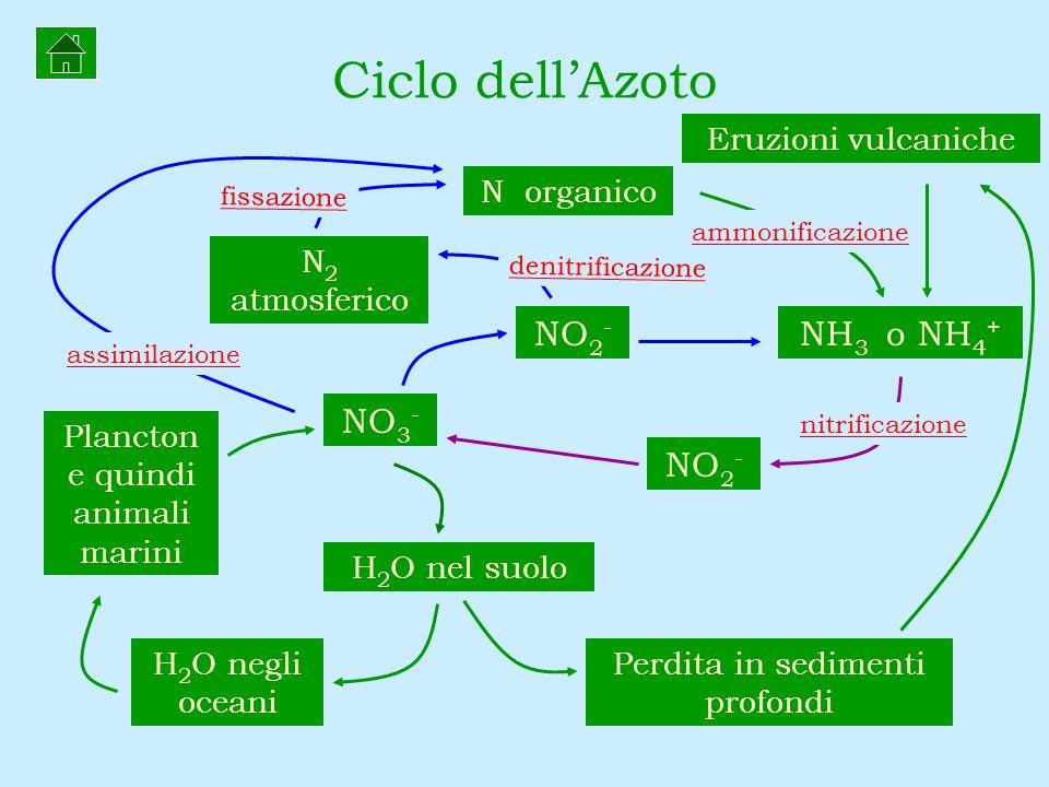 Ciclo dell'Azoto NO2- NH3 o NH4+ NO3- NO2- Eruzioni vulcaniche