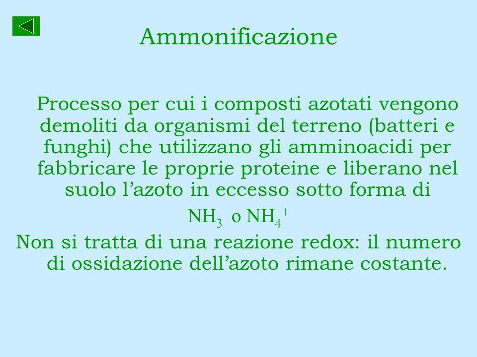 Ammonificazione NH3 o NH4+