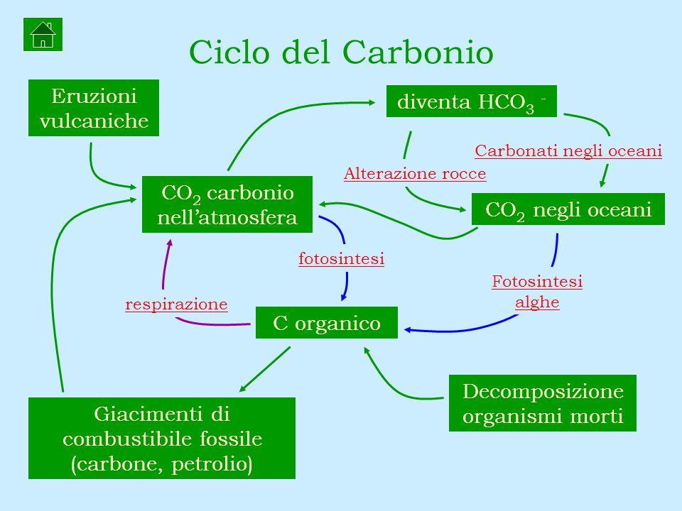 Ciclo del Carbonio Eruzioni vulcaniche diventa HCO3 -