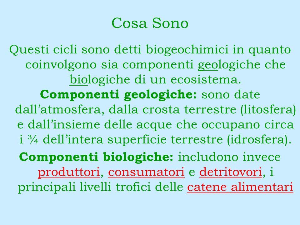Cosa Sono Questi cicli sono detti biogeochimici in quanto coinvolgono sia componenti geologiche che biologiche di un ecosistema.