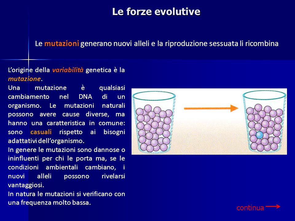 Le forze evolutive Le mutazioni generano nuovi alleli e la riproduzione sessuata li ricombina. L'origine della variabilità genetica è la mutazione.