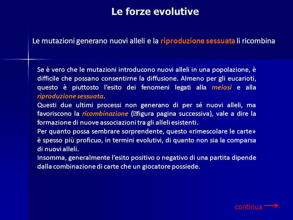 Le forze evolutive Le mutazioni generano nuovi alleli e la riproduzione sessuata li ricombina.