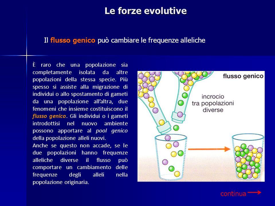 Le forze evolutive Il flusso genico può cambiare le frequenze alleliche.