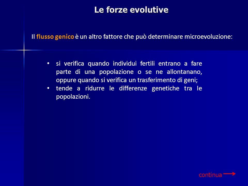 Le forze evolutive Il flusso genico è un altro fattore che può determinare microevoluzione: