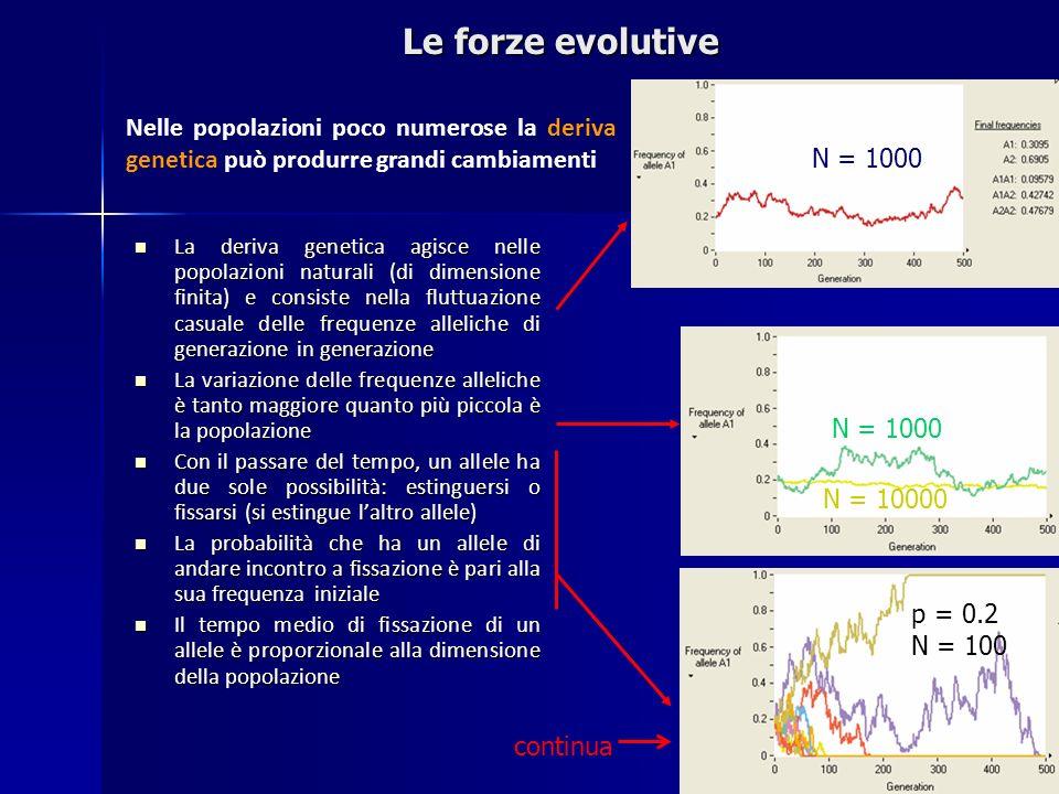 Le forze evolutive Nelle popolazioni poco numerose la deriva genetica può produrre grandi cambiamenti.