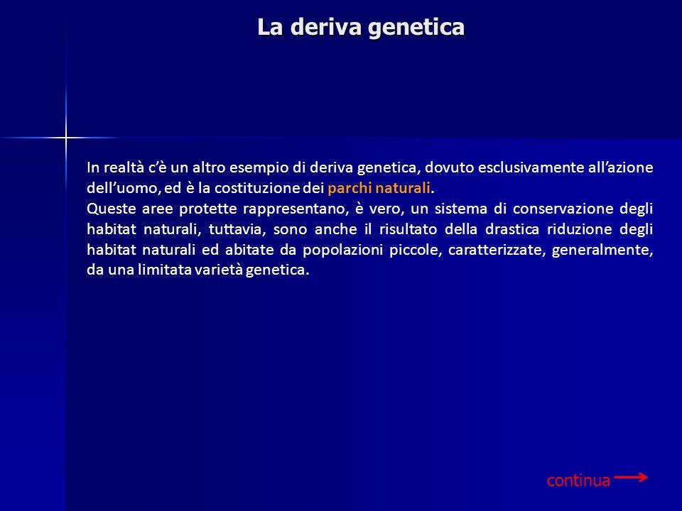 La deriva genetica