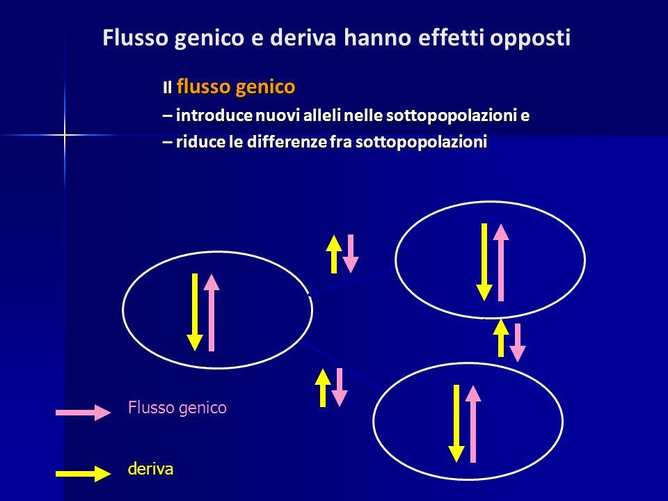 Flusso genico e deriva hanno effetti opposti