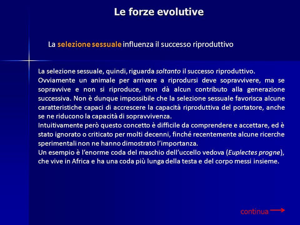 Le forze evolutive La selezione sessuale influenza il successo riproduttivo.