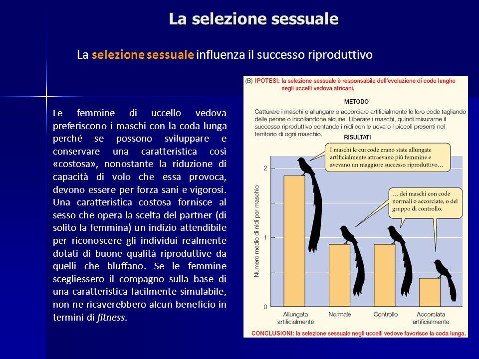 La selezione sessuale La selezione sessuale influenza il successo riproduttivo.