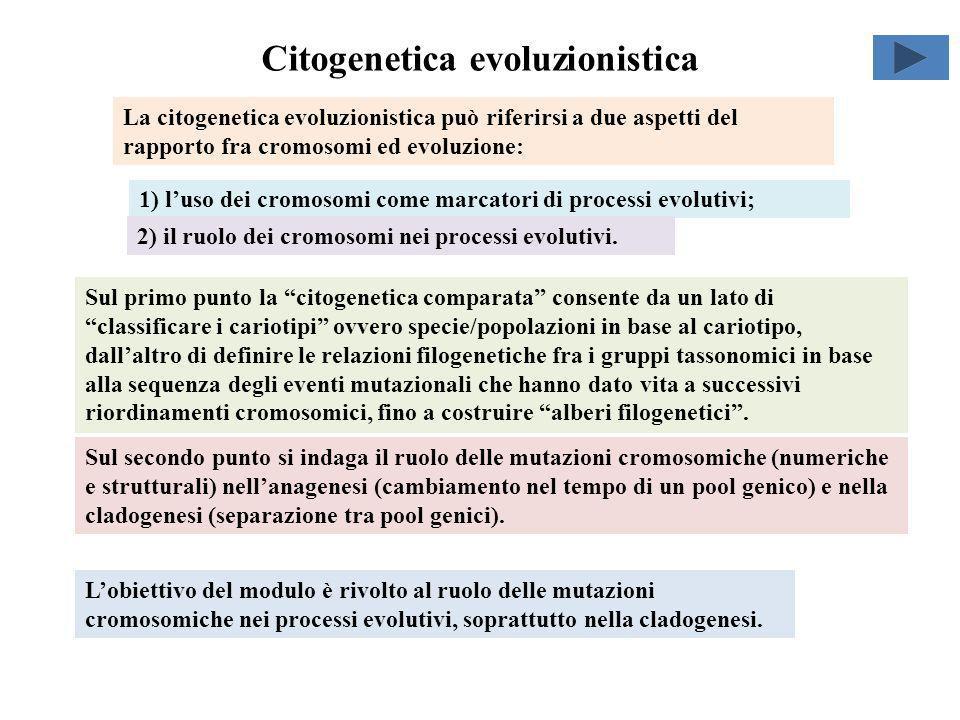 Citogenetica evoluzionistica