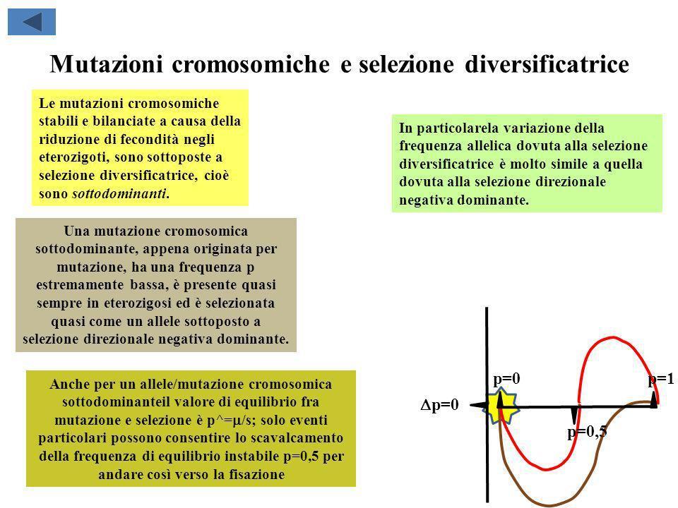 Mutazioni cromosomiche e selezione diversificatrice