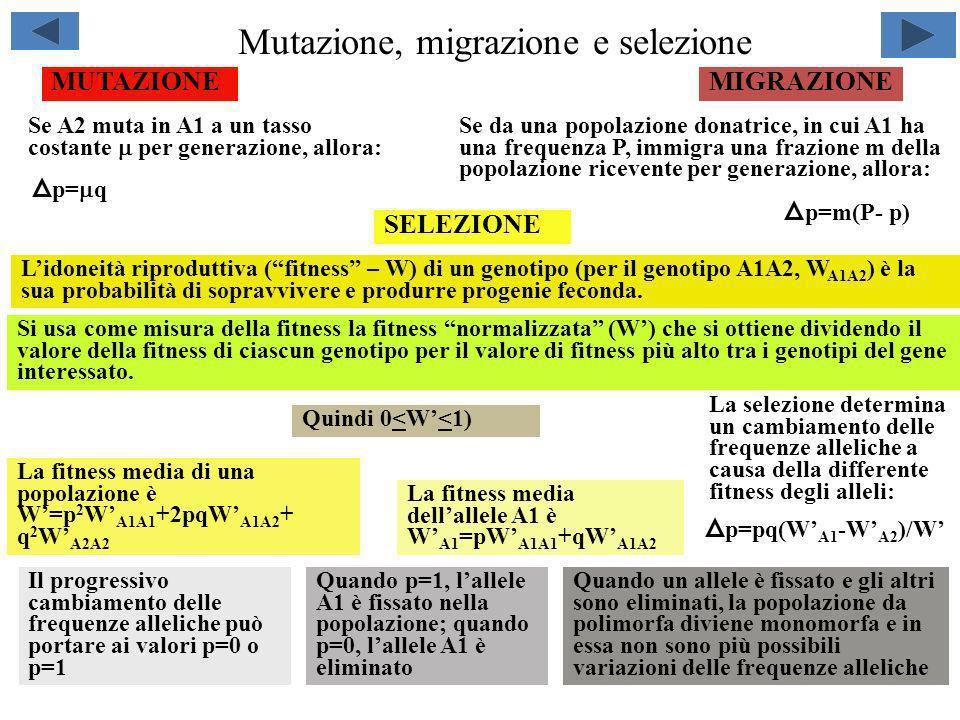 Mutazione, migrazione e selezione