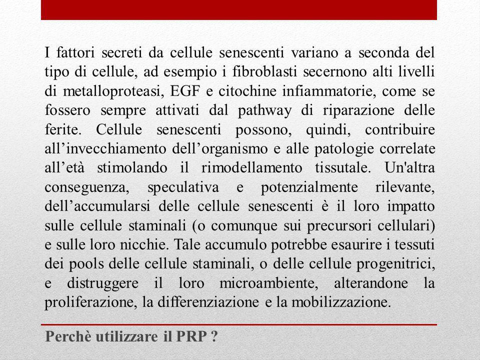 I fattori secreti da cellule senescenti variano a seconda del tipo di cellule, ad esempio i fibroblasti secernono alti livelli di metalloproteasi, EGF e citochine infiammatorie, come se fossero sempre attivati dal pathway di riparazione delle ferite. Cellule senescenti possono, quindi, contribuire all'invecchiamento dell'organismo e alle patologie correlate all'età stimolando il rimodellamento tissutale. Un altra conseguenza, speculativa e potenzialmente rilevante, dell'accumularsi delle cellule senescenti è il loro impatto sulle cellule staminali (o comunque sui precursori cellulari) e sulle loro nicchie. Tale accumulo potrebbe esaurire i tessuti dei pools delle cellule staminali, o delle cellule progenitrici, e distruggere il loro microambiente, alterandone la proliferazione, la differenziazione e la mobilizzazione.