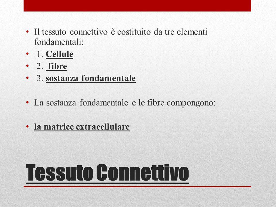 Il tessuto connettivo è costituito da tre elementi fondamentali: