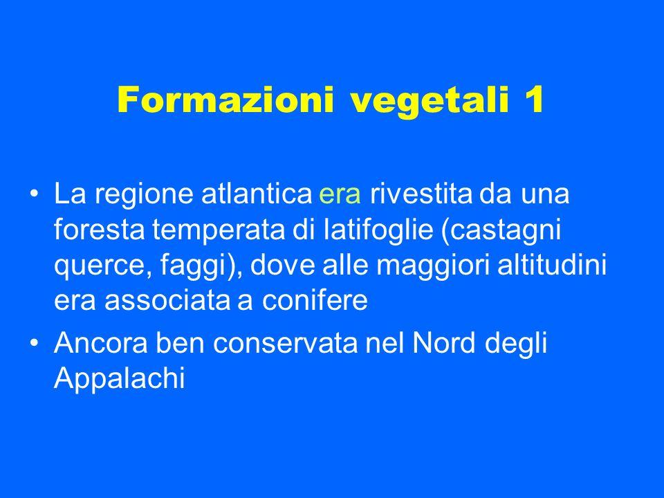 Formazioni vegetali 1