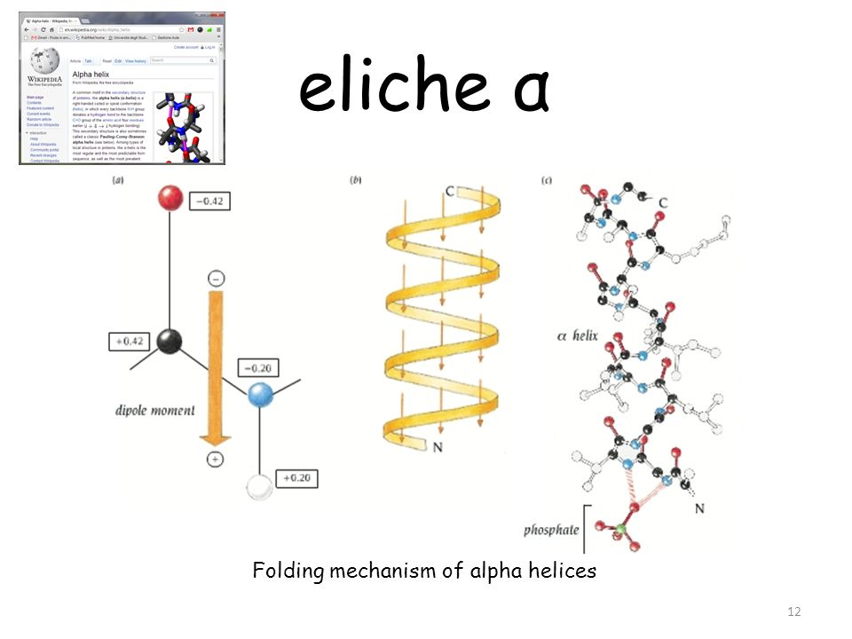 Folding mechanism of alpha helices