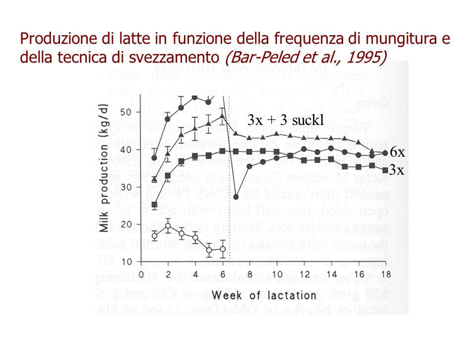 Produzione di latte in funzione della frequenza di mungitura e della tecnica di svezzamento (Bar-Peled et al., 1995)