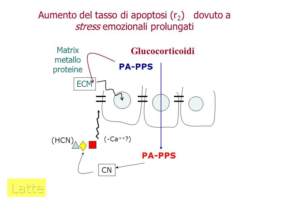 Aumento del tasso di apoptosi (r2) dovuto a stress emozionali prolungati