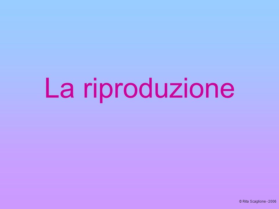 La riproduzione © Rita Scaglione - 2006