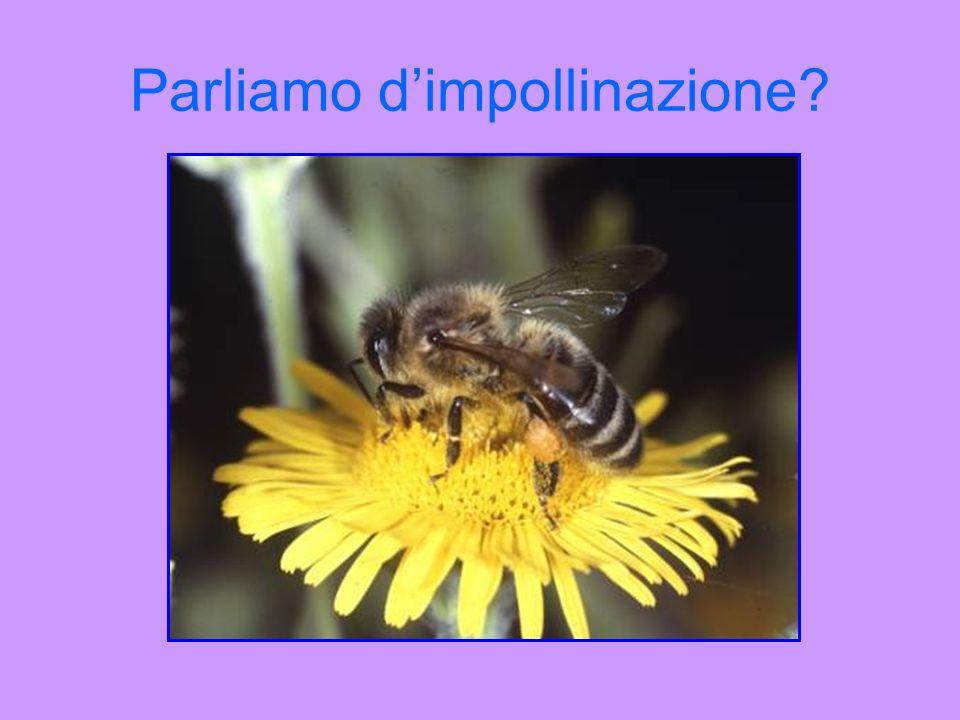 Parliamo d'impollinazione