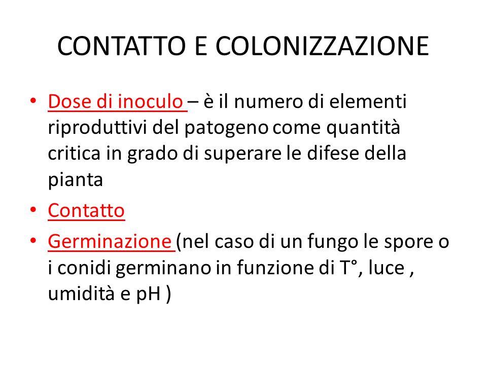 CONTATTO E COLONIZZAZIONE