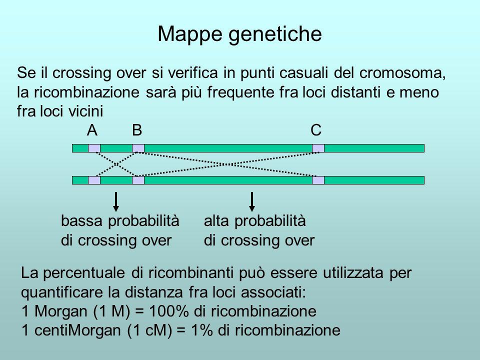 Mappe genetiche